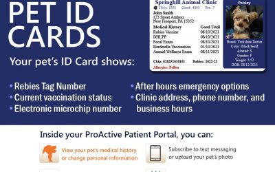 VetScene Patient Portal