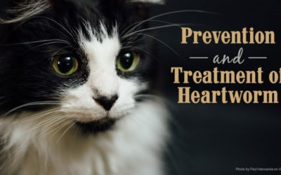 Prevention and Treatment of Heartworm Disease in Dogs and Cats
