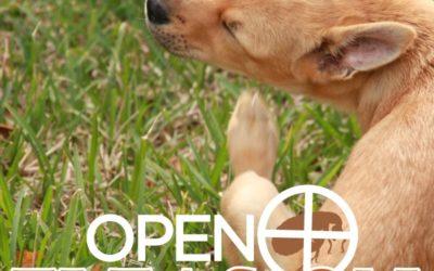 "Open ""Fleas-on"""