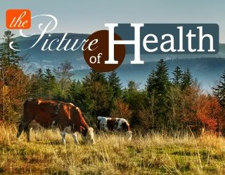 Preventative Care for Cattle