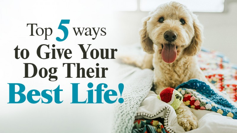 Top 5 Ways to Give Your Dog Their Best Life! (*HINT: Pay Special Attention to #5!)